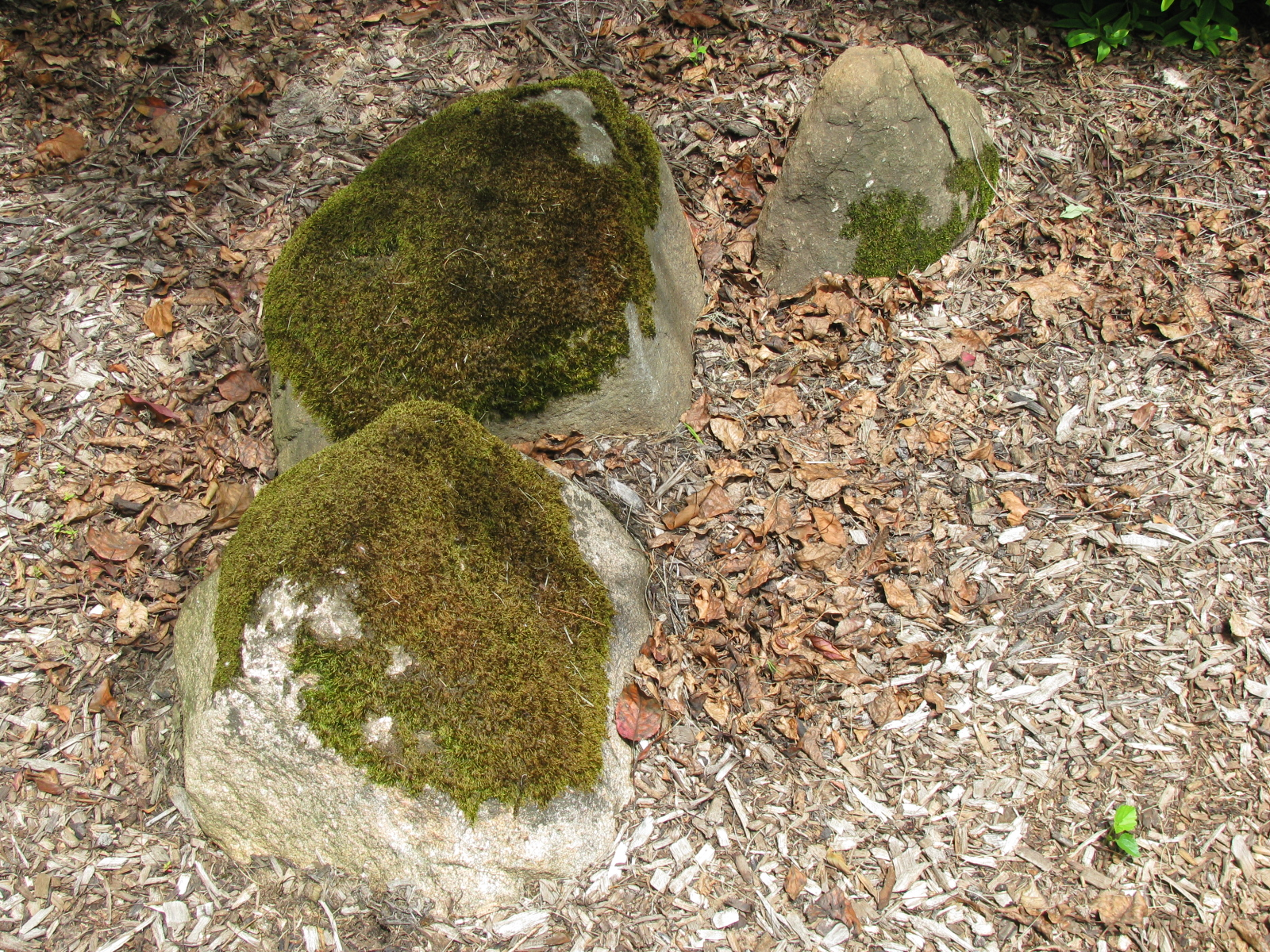 Old Mossy Rock